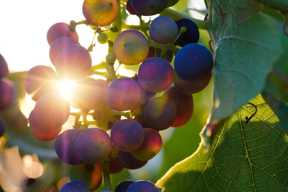 Frutta e verdura: scopri le delizie di settembre!